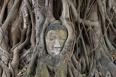 Tree Roots Photograph - Buddha Head In Tree, Temple Wat Mahatat, Thailand by Peter Adams