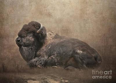 Bison Digital Art - Buffalo by Lynn Jackson