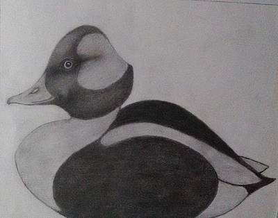 Drake Drawing - Bufflehead Drake by John Sewell