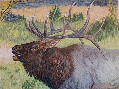 Bull Elk Print by Gail Seufferlein