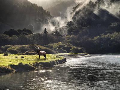 Bull Elk In Wilderness Print by Leland D Howard