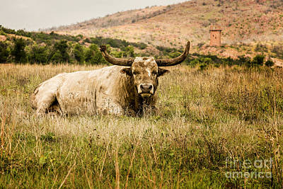 Photograph - Bull Longhorn by Tamyra Ayles