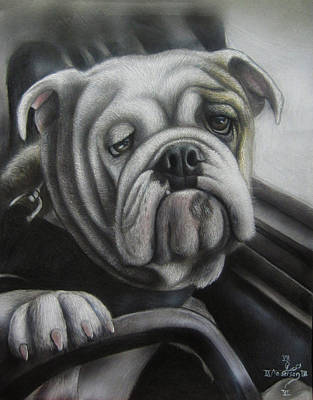 English Bulldog Drawing Drawing - Bulldog At The Wheel by Jonathan Anderson