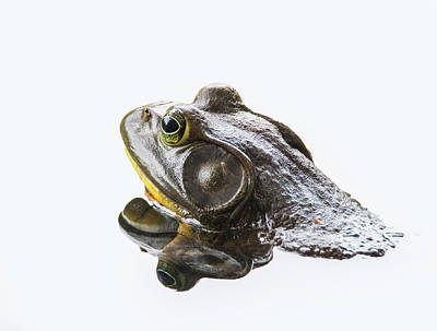 Bullfrog Photograph - Bullfrog by Angie Vogel