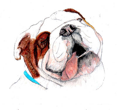 English Bulldog Drawing Drawing - Bully For You by Barbara Giordano