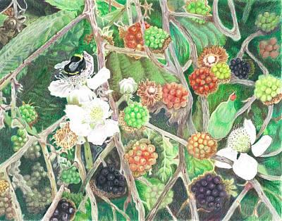 Bumblebee Drawing - Bumblebee And Blackberries by Vera Rodgers