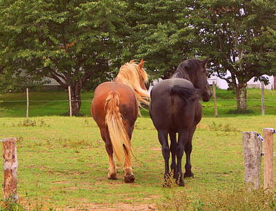 Belgian Draft Horse Photograph - Bums Away by Karen Cook