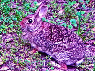 Stew Photograph - Bunnies On The Move by Chuck Taylor
