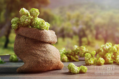 Burlap Sack Filled With Hops Print by Amanda Elwell