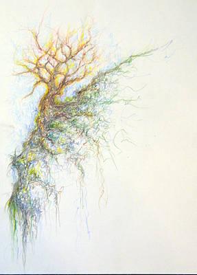 Drawing - Burning Bush by David  Maynard