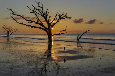 Edisto Photograph - Burning Tree by Mike Lang