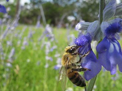 Bee Photograph - Busy Bee 3 by Rebecca Shupp