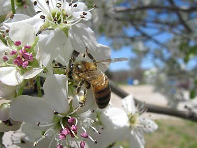 Bee Photograph - Busy Bee by Rebecca Shupp