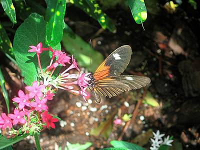 Flutter Photograph - Buterfly Flowers And Green by Mario Perez