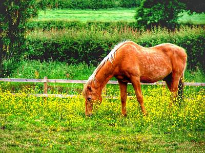 Horse Photograph - Buttercup Meadow by Isabella Abbie Shores