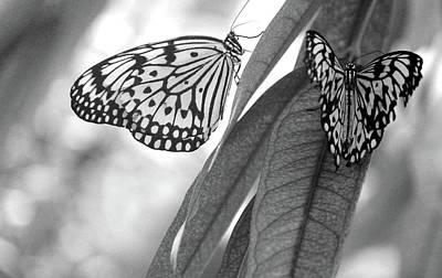 Leaves Photograph - Butterflies by The Art Of Marilyn Ridoutt-Greene