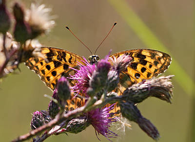 Bug Photograph - Butterfly by Jan Boesen