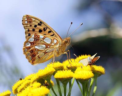 Insect Photograph - Butterfly by Jan Boesen
