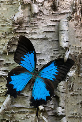 Tree Bark Photograph - Butterfly by Andreas Freund