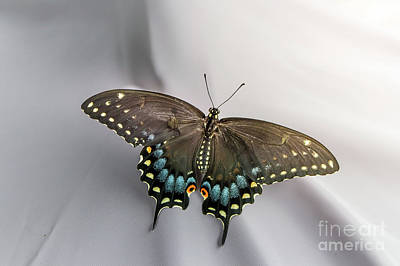 Swallow Tail Photograph - Butterfly At Picnic by Robert Frederick