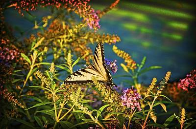 Butterfly Bandit Print by Nick Roberts