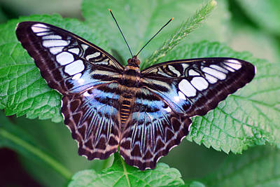 Mental Imagery Photograph - Butterfly by Don  Wright