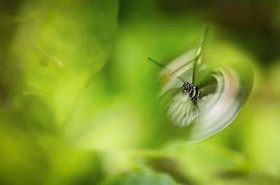 Butterfly In Motion Photograph - Butterfly Enegry by Jennifer