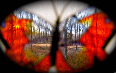 Natures Wonderful Colors Digital Art - Butterfly Forest by Debra     Vatalaro