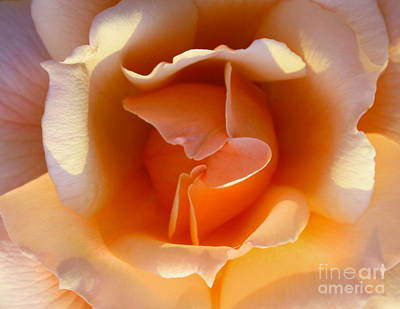 Roses Photograph - Butterfly by Gary Deal