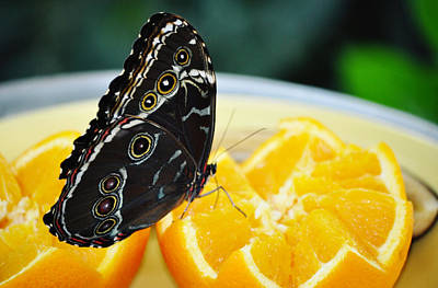 Butterfly Haven Citrus Print by Kyle Hanson