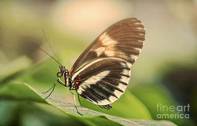 Butterfly In The Fog Print by Sebastien Coell
