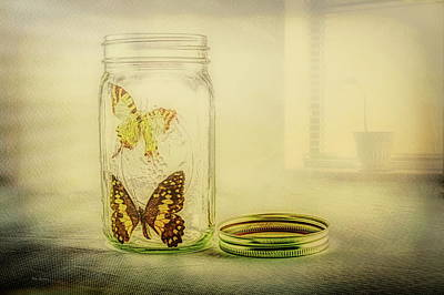 Photograph - Butterfly Jar by Bob Orsillo