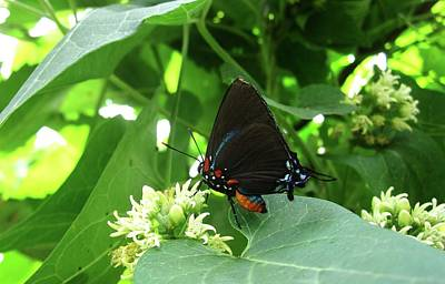Animal Photograph - Butterfly by Mary Ellen Frazee