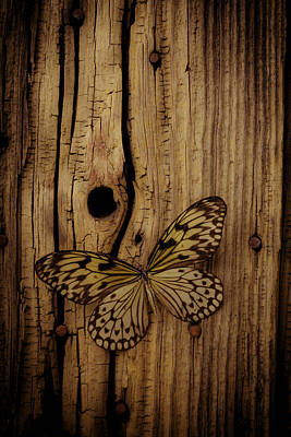 Butterfly On Old Wood Wall Print by Garry Gay