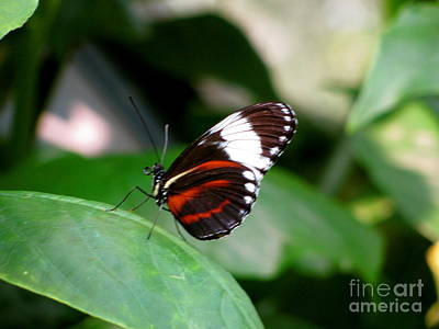 Leaves Photograph - Butterfly by Sherri Williams