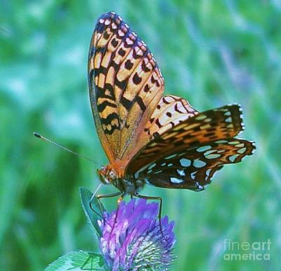 Checkerspot Photograph - Butterfly Stare by Emily Michaud