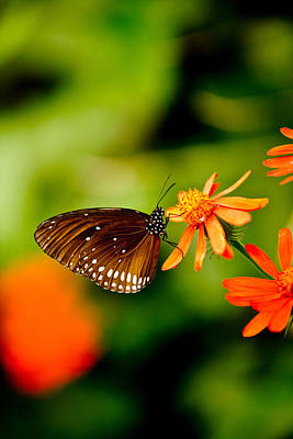 Butterfly Photograph - Butterfly With Orange Flowers by Hakon Soreide