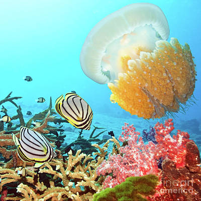 Butterflyfishes And Jellyfish Print by MotHaiBaPhoto Prints