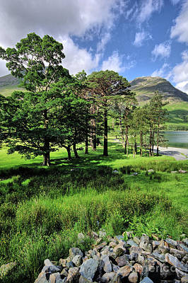 Buttermere Pines Print by Stephen Smith