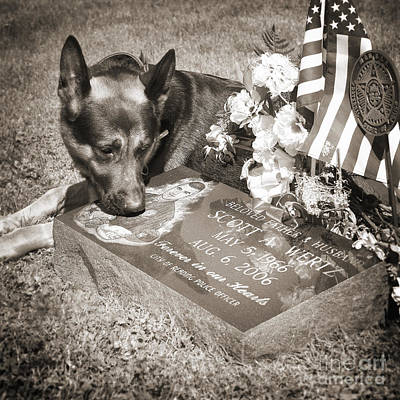Pet Photograph - Buy A Print. Show Your Support For Reading K9 Police.  Willow Street Pictures.  by Darren Modricker