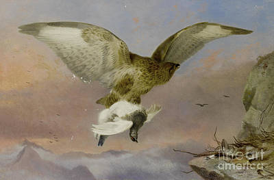 Buzzard Painting - Buzzard With Ptarmigan  by MotionAge Designs