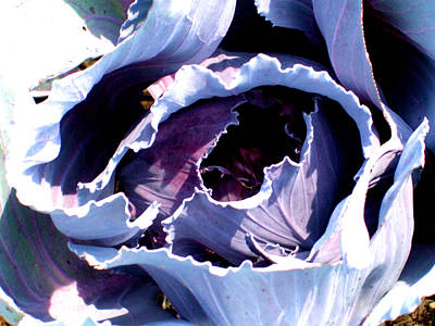 Cabbage Print by Mindy Newman