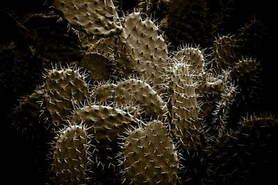 Indoor Photograph - Cactaceae by Frank Tschakert