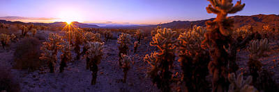 Joshua Tree Photograph - Prickly by Chad Dutson
