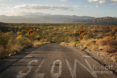 Sonoran Desert Photograph - Cactus Landscape by Juli Scalzi
