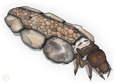 Trout Painting - Caddisfly Larva Nymph Goeridae_silo_pallipes -  by Urft Valley Art