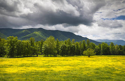 Cades Cove Great Smoky Mountains National Park Tn - Fields Of Gold Print by Dave Allen