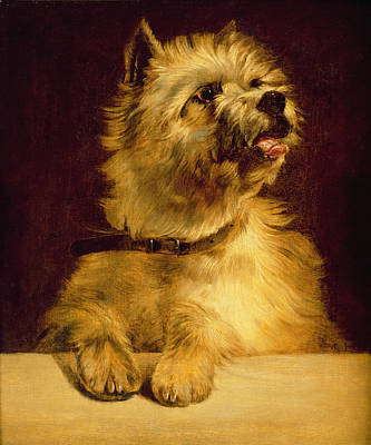 Puppy Dog Eyes Painting - Cairn Terrier   by George Earl