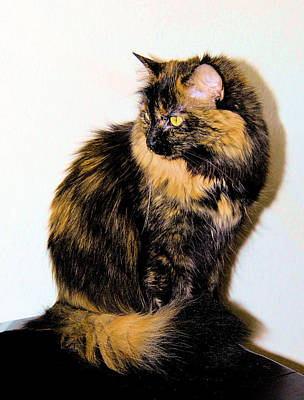 Of Calico Cats Photograph - Calico Cats by Cheryl Poland