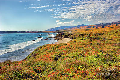 California Coast Wildflowers On Cliffs Print by Dan Carmichael